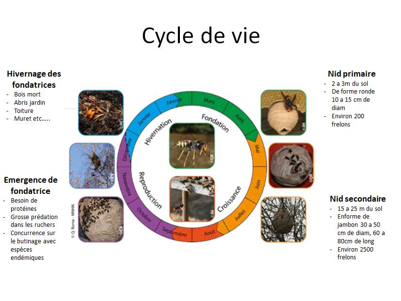 Cycle fa